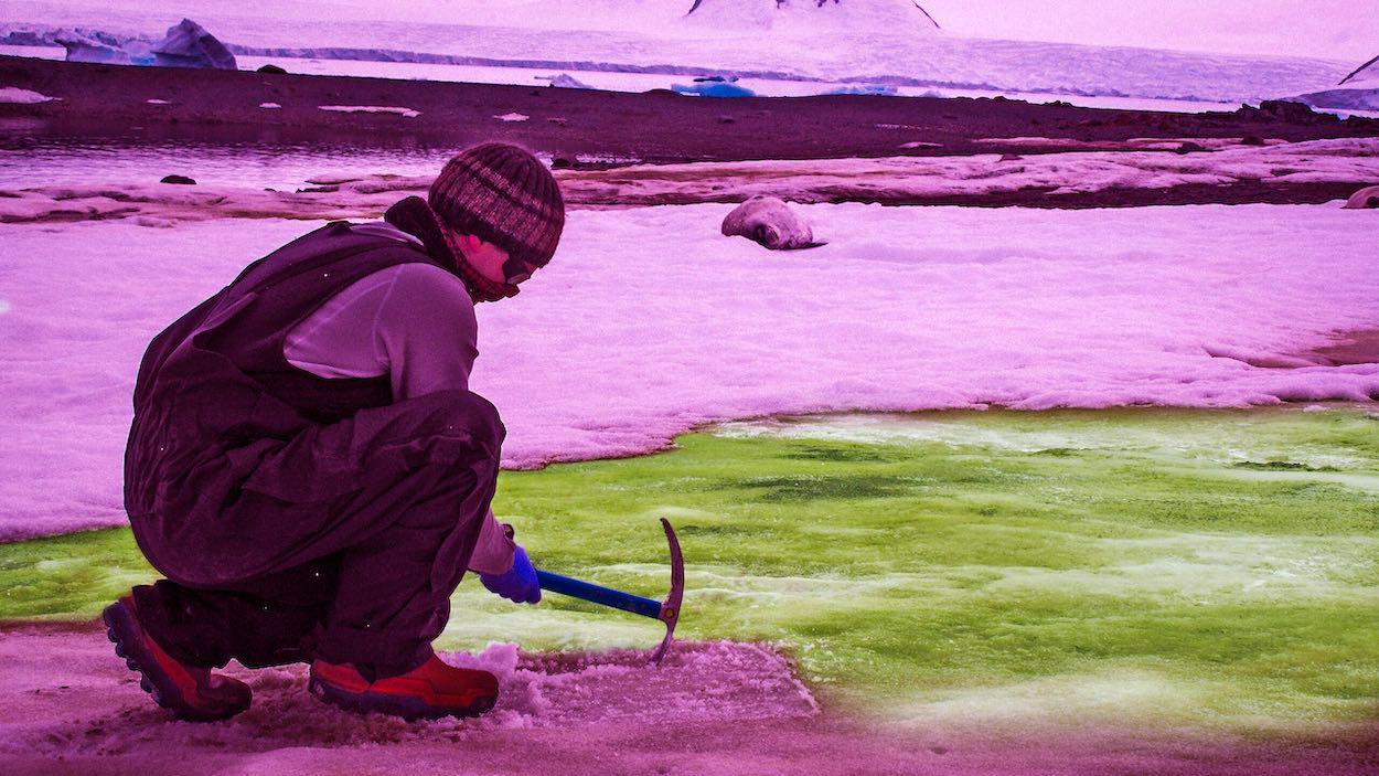 antarktika yeşil