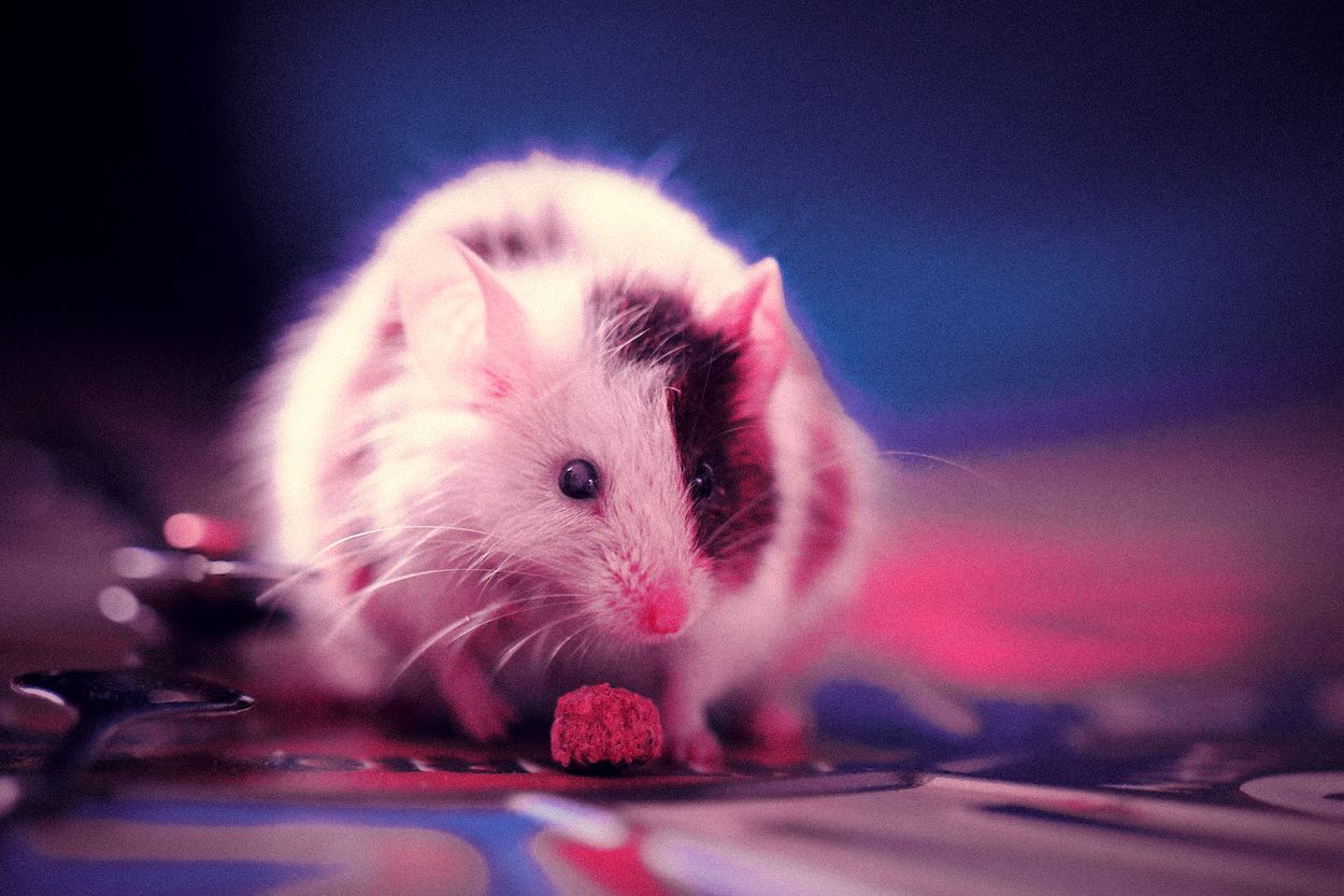 fare kış uykusu deney