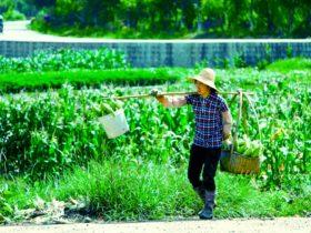 organik tarımın lideri çin