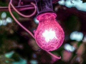 bitkilerden enerji üretimi