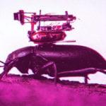 böceklere takılan kamera